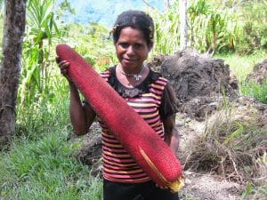 manfaat khasiat buah merah papua asli